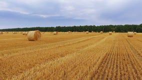 收获干草干草堆的粗糙的域滚夏天 股票录像