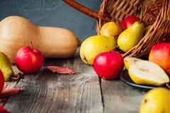 收获或感恩背景用秋季果子和金瓜在一张土气木桌上 选择聚焦,文本的空间 免版税库存图片