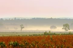 收获有薄雾的早晨 免版税库存照片