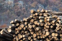 收获木材日志 免版税图库摄影