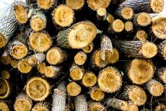 收获木材日志 库存图片