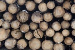 收获木材 库存图片