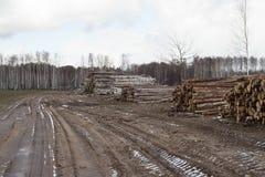 收获木材 免版税库存照片