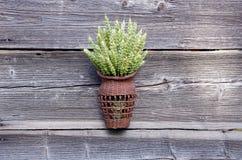 收获标志-在柳条筐的麦子耳朵在老谷仓墙壁上 库存图片