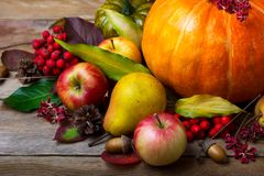 收获概念用南瓜,梨,苹果,花楸浆果 免版税图库摄影