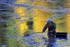 收获池塘 免版税库存图片