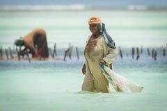 收获海的地方妇女从印度洋除草 免版税库存照片