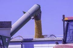 收获玉米的拖拉机 免版税库存图片