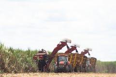 收获甘蔗 免版税库存图片