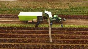 收获由拖拉机的圆白菜 与沙拉行的领域  影视素材