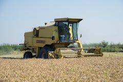 收获的和打谷的米在意大利 免版税库存图片