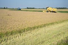 收获的和打谷的米在意大利 库存照片