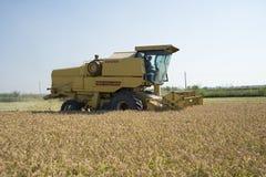 收获的和打谷的米在意大利 库存图片