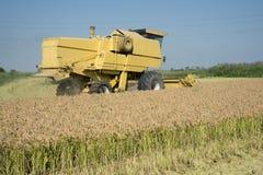 收获的和打谷的米在意大利 免版税图库摄影