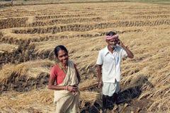 收获米的农夫 库存图片