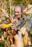 收获纵向前辈妇女的玉米 图库摄影