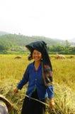 收获纵向泰国妇女 图库摄影
