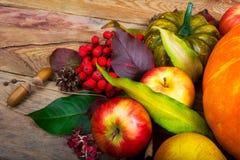 收获背景用苹果,花楸浆果,绿色南瓜 图库摄影