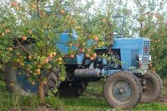 收获苹果在果树园 树用成熟苹果和拖拉机 土气样式,选择聚焦 图库摄影