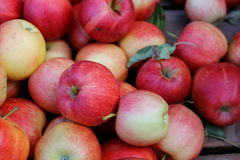 收获苹果 免版税图库摄影