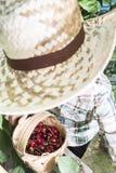 收获莫利洛黑樱桃的孩子 库存图片