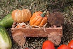 收获菜在一辆木台车在 库存照片
