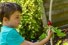 收获萝卜的孩子 图库摄影