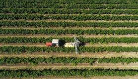 收获葡萄的拖拉机的鸟瞰图在葡萄园里 与拖拉机的农夫喷洒的葡萄树 库存照片