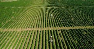 收获葡萄的拖拉机的鸟瞰图在葡萄园里 与拖拉机的农夫喷洒的葡萄树 股票视频
