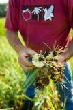 收获葱的农夫 免版税库存照片