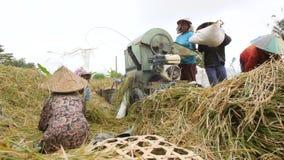 收获过程的米 巴厘语工作在稻田的农厂工人 传统亚洲农业 4K 2018年12月25日-巴厘岛, 股票录像