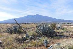 收获领域和龙舌兰酒火山的蓝色龙舌兰 免版税图库摄影