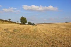收获风景在秋天 免版税库存照片