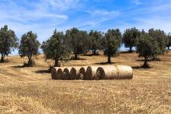 收获麦子和秸杆大包的领域 免版税库存图片