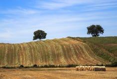 收获麦子和秸杆大包的领域 免版税库存照片