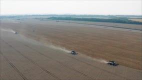 收获麦子在夏天 运作在领域的两台红色收割机 在领域的两台收割机收集麦子 股票录像