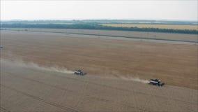 收获麦子在夏天 运作在领域的两台红色收割机 在领域的两台收割机收集麦子 股票视频