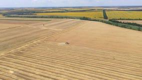 收获麦子庄稼的联合收割机鸟瞰图 股票视频