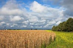 收获麦子的域 免版税库存照片