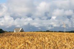 收获麦子的域 库存图片