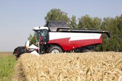 收获麦田工作的收割机机器 收获金黄成熟的组合农业 免版税库存照片