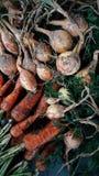 收获,乡村生活、葱和红萝卜,菜 库存照片