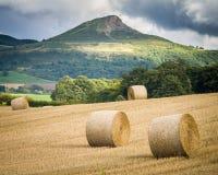收获-北约克郡-英国 免版税库存图片