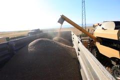 收获组合的麦子 库存图片