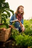 收获从屋顶温室庭院的友好的妇女新鲜蔬菜 免版税库存照片