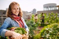 收获从屋顶温室庭院的友好的妇女新鲜蔬菜 库存照片