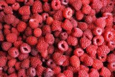 收获 莓果是成熟和可口莓 免版税图库摄影