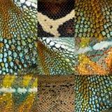 收集五颜六色的九只爬行动物皮肤 免版税库存图片
