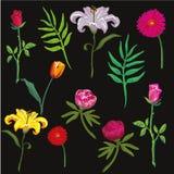 收集五颜六色的花 也corel凹道例证向量 免版税图库摄影