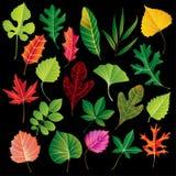 收集叶子向量 免版税库存图片